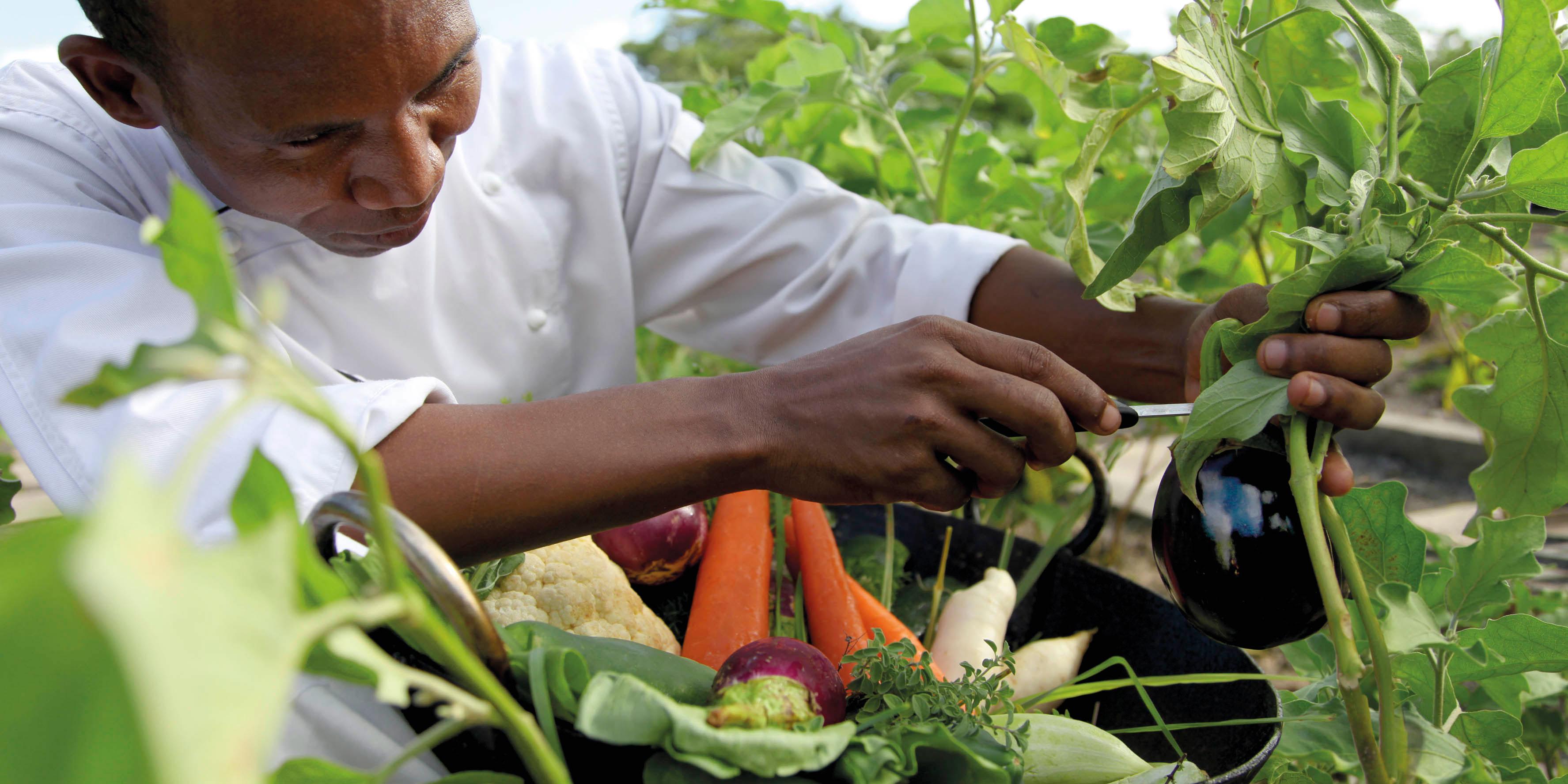 shanti maurice nutrition